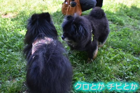 540px20150621_FUGA&カムイ-01
