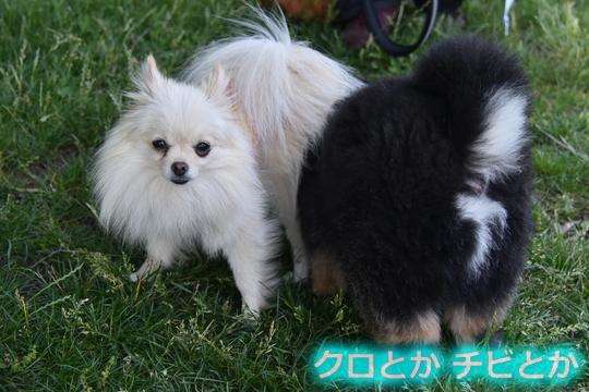 540px20150621_MiTo&カムイ-05