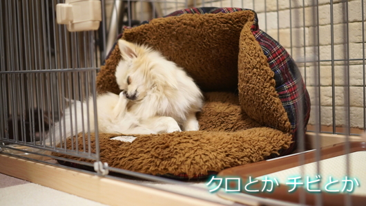 530px20150219_MiTo-0003.jpg