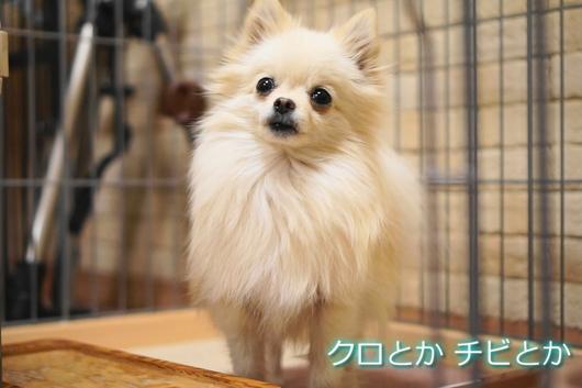 530px20150219_MiTo-0005.jpg