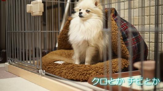 530px20150219_MiTo-0010.jpg
