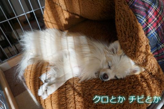 535px20150104_MiTo-01.jpg