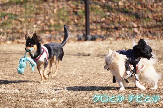 535px20150106_MiTo-06.jpg