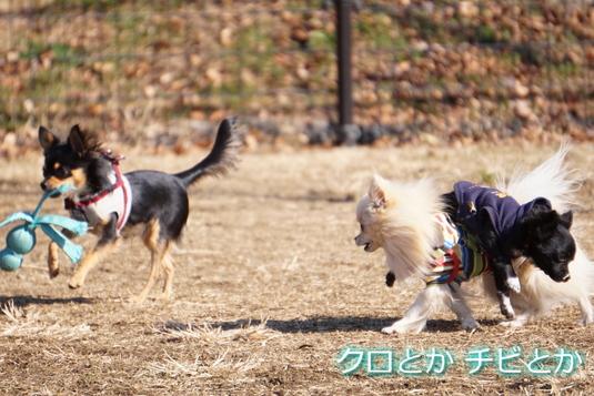 535px20150106_MiTo-07.jpg
