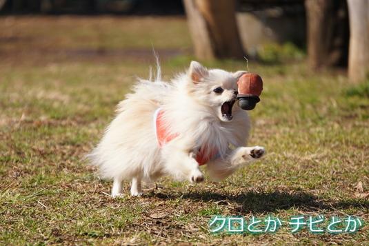 535px20150127_MiTo-001.jpg