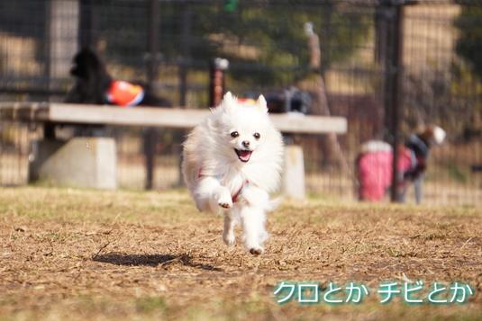 535px20150127_MiTo-002.jpg