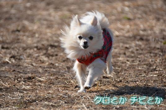 535px20150129_MiTo-03.jpg
