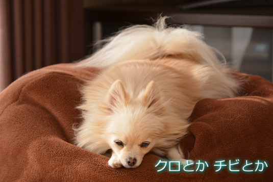 535px2015012_MiTo-01.jpg