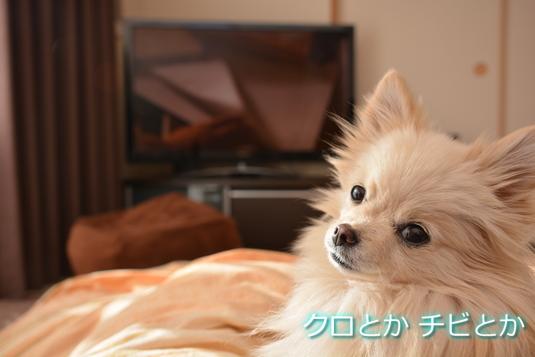 535px2015012_MiTo-08.jpg