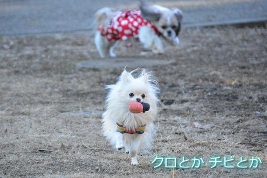 535px2015013_MiTo-01.jpg