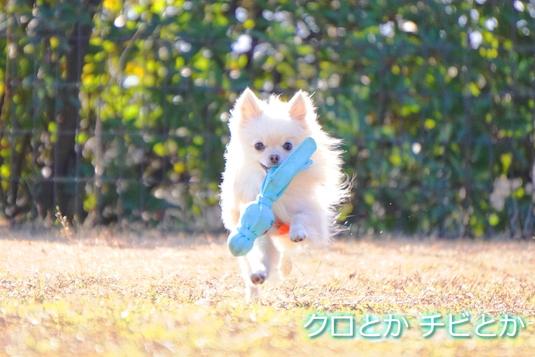 535px20150204_MiTo-01.jpg