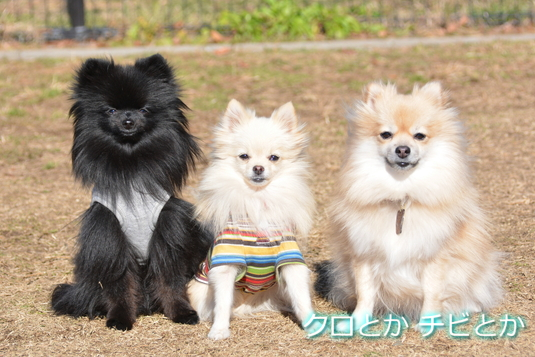 535px20150208_sibling_with_CANDY-01.jpg