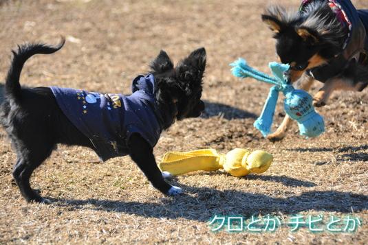 535px20150212_CHIBI-001.jpg