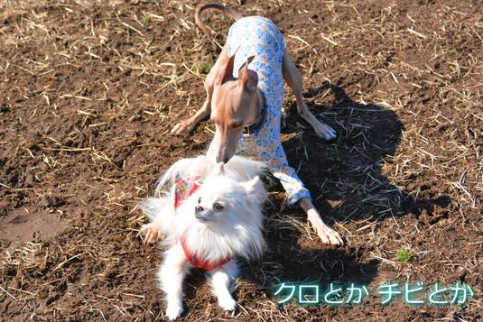535px20150212_MiTo-06.jpg