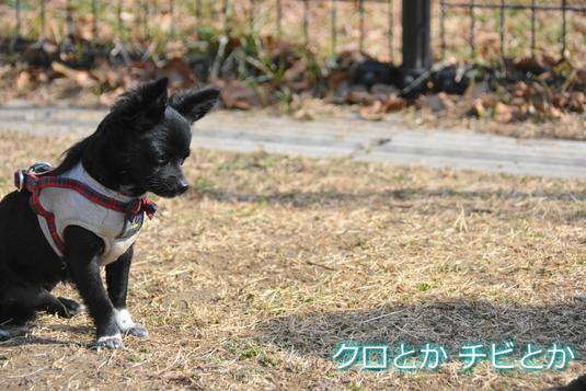 535px20150216_CHIBI-001.jpg