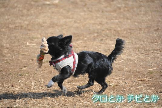 535px20150216_CHIBI-006.jpg