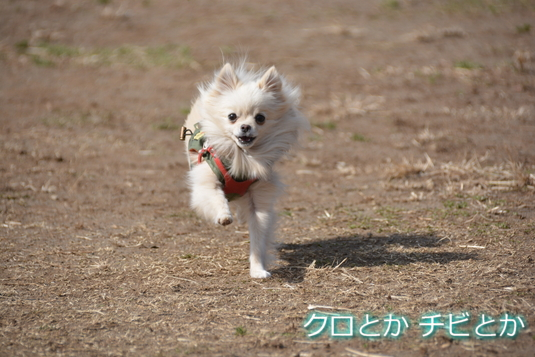 535px20150217_MiTo-04.jpg