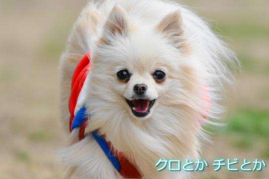 540px20150309_MiTo-07.jpg