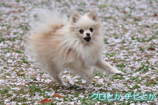 540px20150418_MiTo-05.jpg