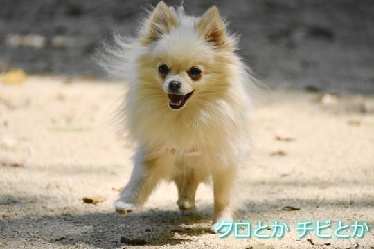 540px20150503_MiTo-01.jpg