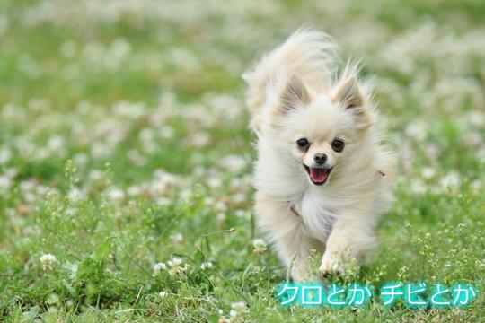 540px20150518_MiTo-01.jpg