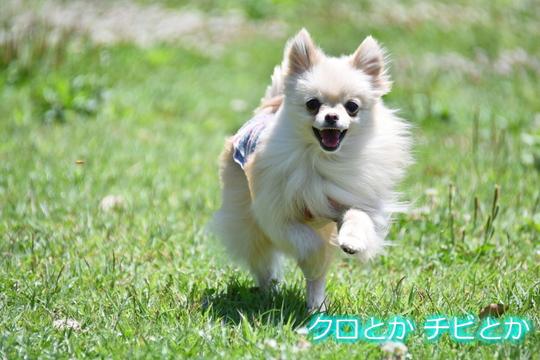 540px20150521_MiTo-01.jpg