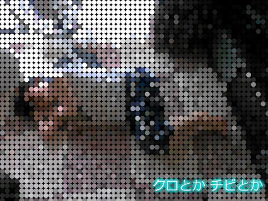 540px20150524_KAKA-01.jpg