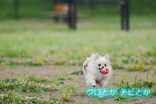 540px20150529_MiTo-01.jpg