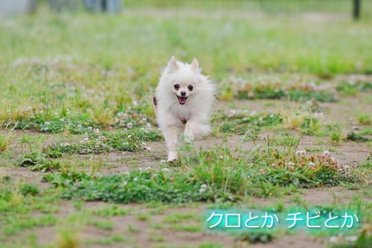 540px20150529_MiTo-03.jpg