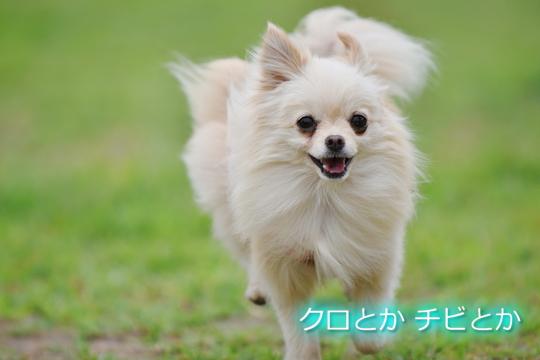 540px20150605_MiTo-01.jpg