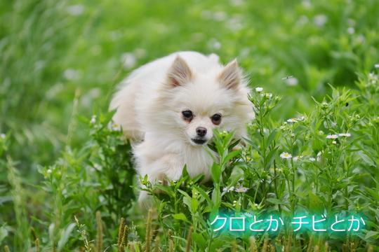 540px20150607_MiTo-02.jpg