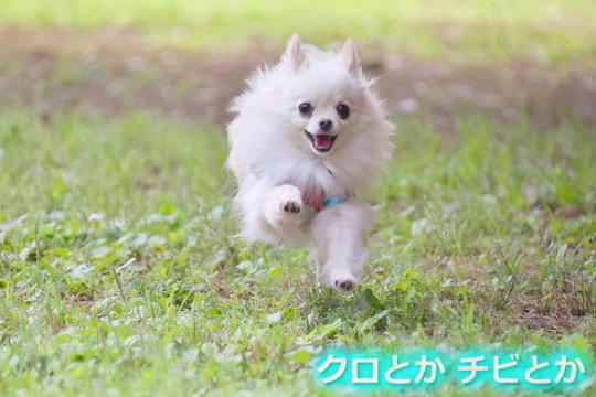 540px20150625_MiTo-01.jpg