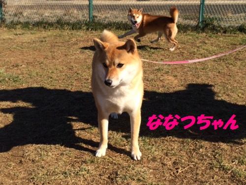 IMG_4568 (1)Blog