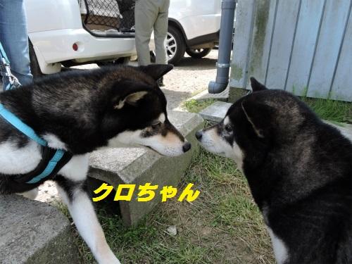 DSCN3767Blog_R.jpg
