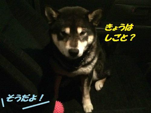 IMG_3473BlogBlog.jpg