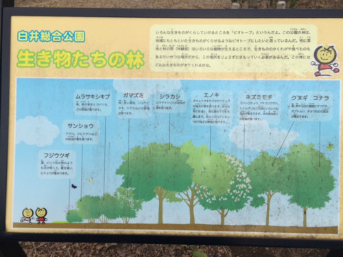 IMG_4439Blog.jpg