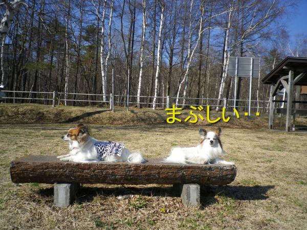 2015-04-23-1+030_convert_20150424165558.jpg