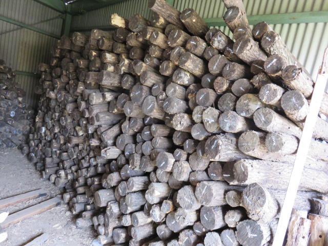 産卵木入荷2