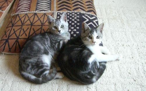2010_1013_135556-2010-10-13子猫ちゃん達 トリミング縮小