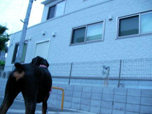 201506110429朝散歩④