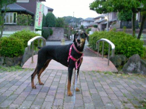 201506110429朝散歩②