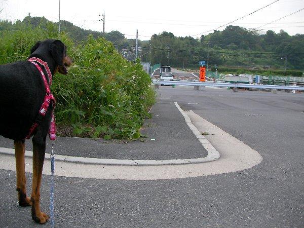 201506110500朝散歩⑯