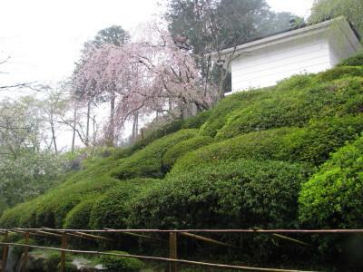 式部文庫と枝垂れ桜