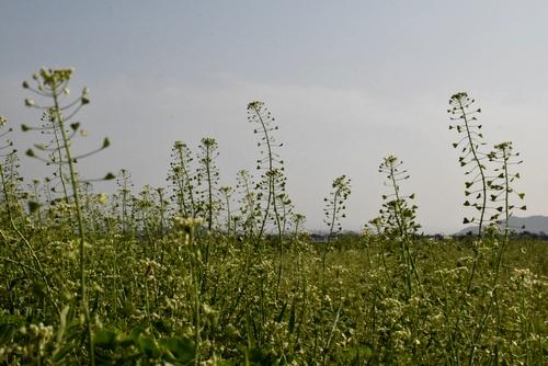 270328 野の花1