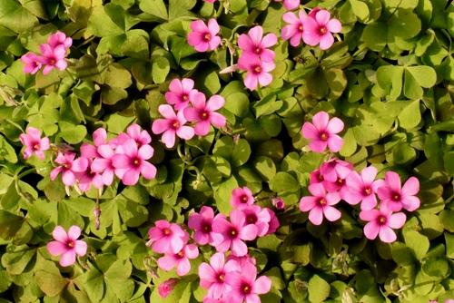 270328 野の花17