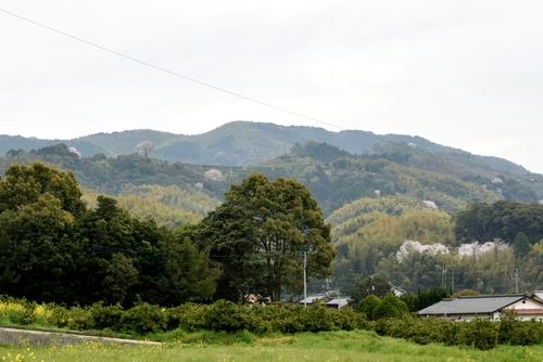 270331 天保古山の1本桜36