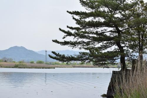 270418 江津湖レガッタ17