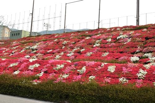270423 星の花公園33
