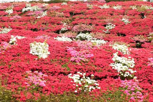 270423 星の花公園34