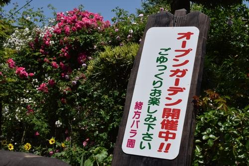 270508 緒方バラ園1